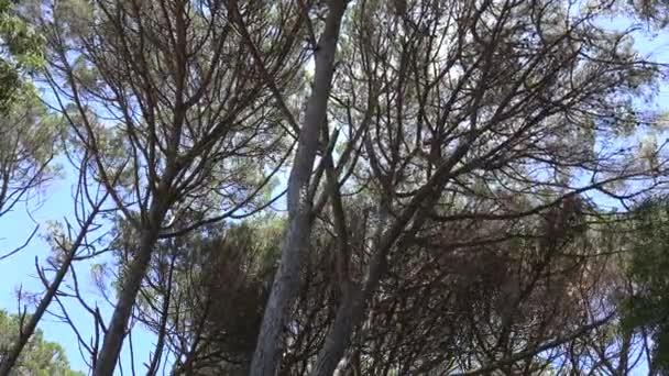 Stromy a větve během podzimní vítr