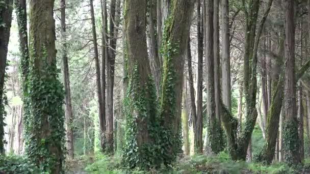 Szőlő és szeles erdei fák