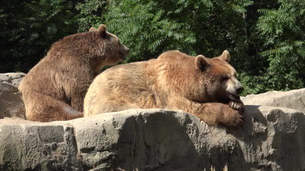 Medvědi hnědí, relaxační venkovní