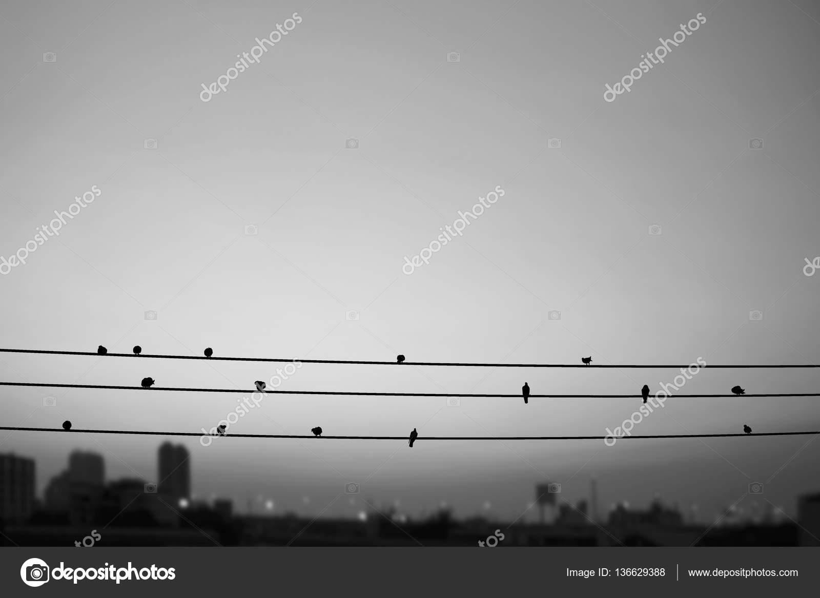 Schwarz weiße Vögel auf elektrischen Leitungen in der Großstadt ...