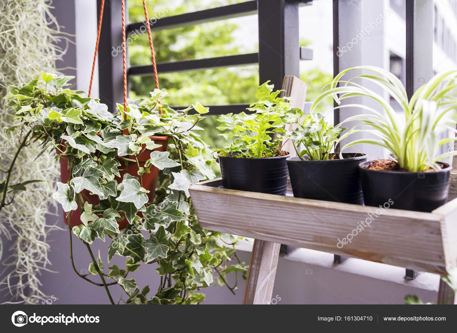 Tuinieren Op Balkon : Huis en tuin concept van engels klimop plant in pot op het balkon