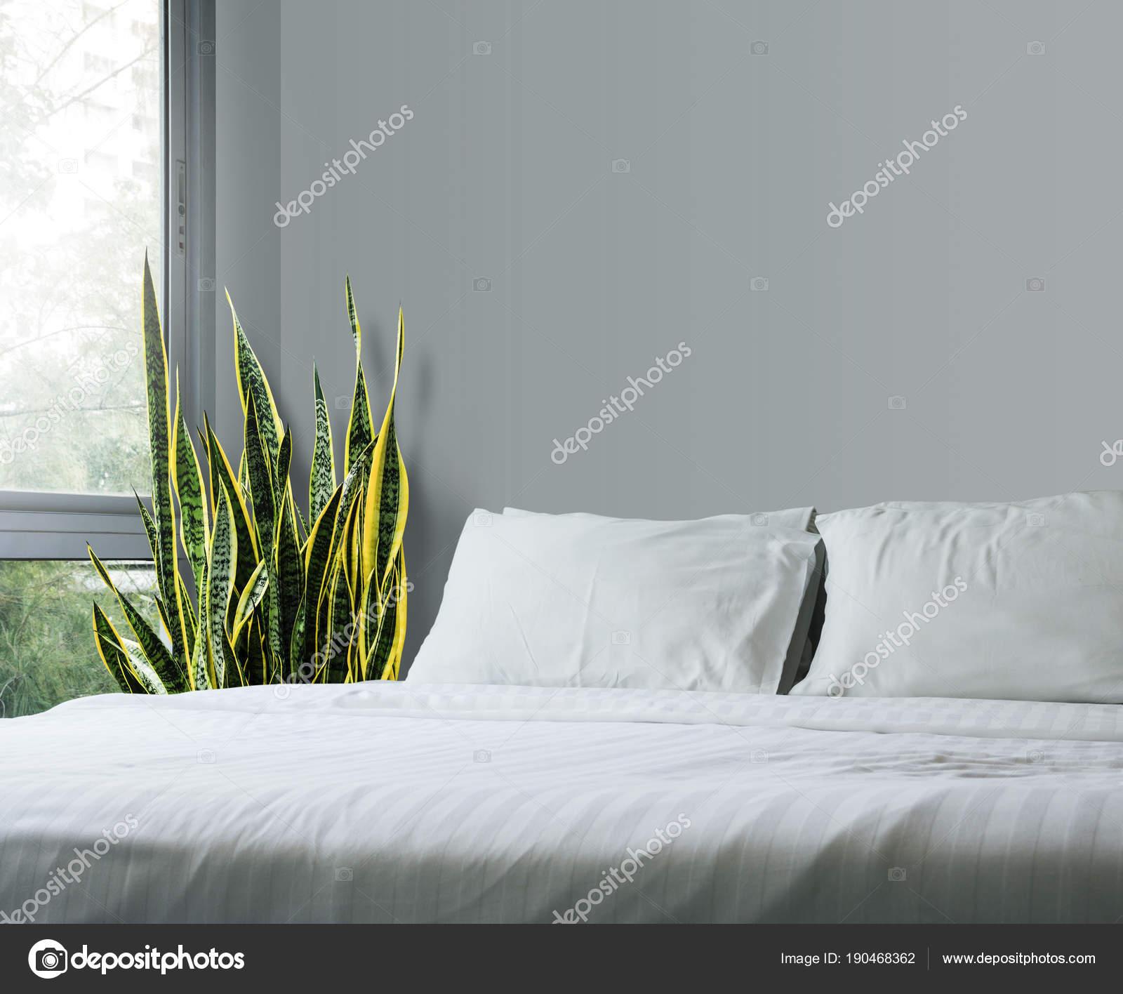 bogenhanf schlafzimmer kopfkissen memory schaum pflanzen im schlafzimmer schimmel bettw sche. Black Bedroom Furniture Sets. Home Design Ideas