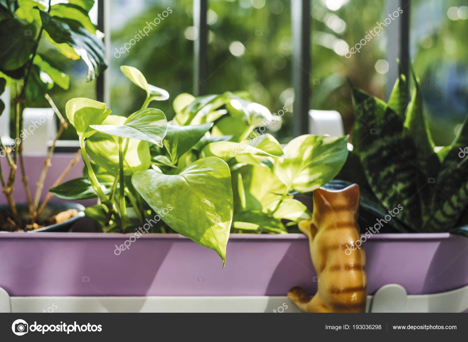 Kleine tuin decoratie op het terras condominium u stockfoto