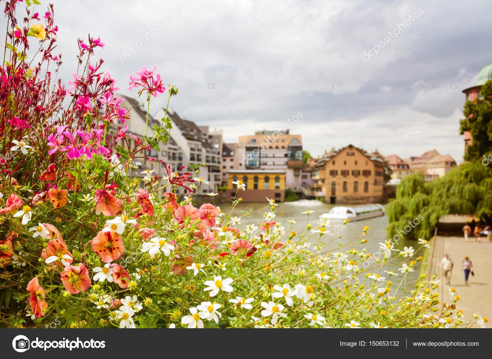 Beautiful Summer Flowers Stock Photo Maglara 150653132