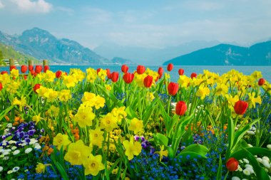 Beautiful flowers over lake Lucerne
