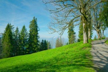 """Картина, постер, плакат, фотообои """"фон с зеленой травой, деревьями постеры фотографии арт"""", артикул 151709154"""