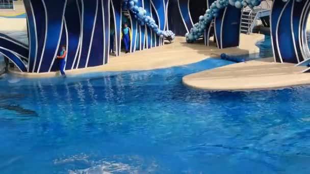 Orlando, Florida. 28. února2020. Delfíni skákají po moři.