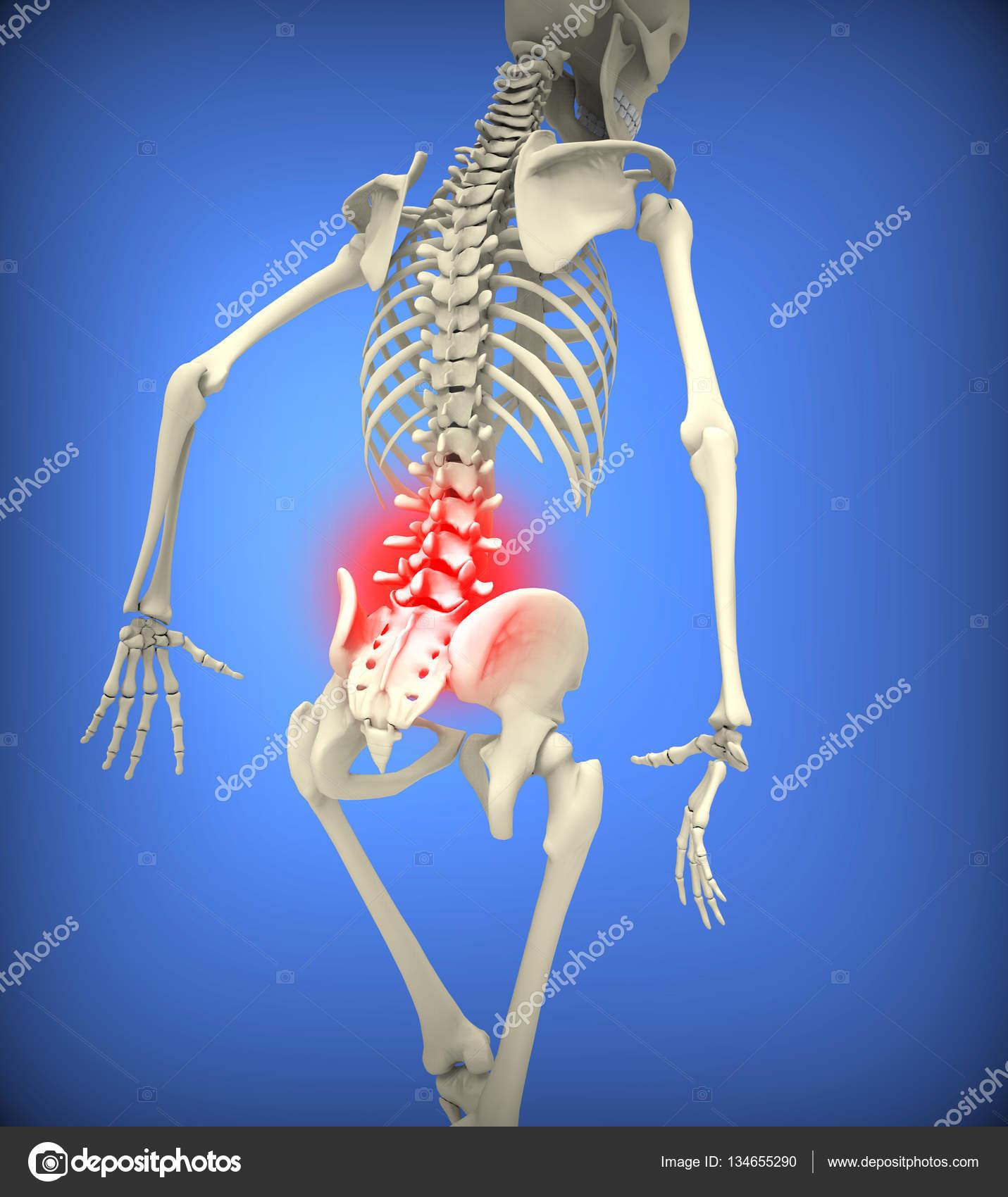 menschliches Skelett mit unteren Wirbelsäule hervorgehoben ...