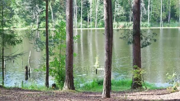 Stromy na břehu rybníka