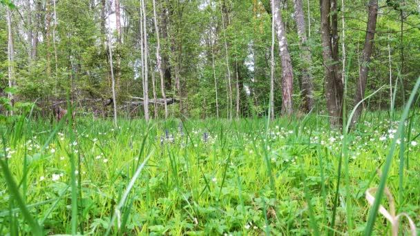 schöne Waldlichtung an einem Frühlingstag.