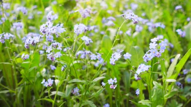 krásné modré kytice