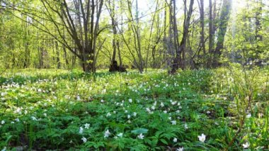 Still morning in forest.