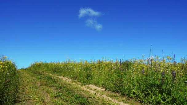 Országúton: szép napot nyári területén.