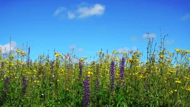 schöne Landschaft mit Blumen und blauem Himmel.