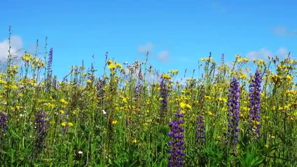Dolly-Shooting der Landschaft mit Blumen und blauer Himmel