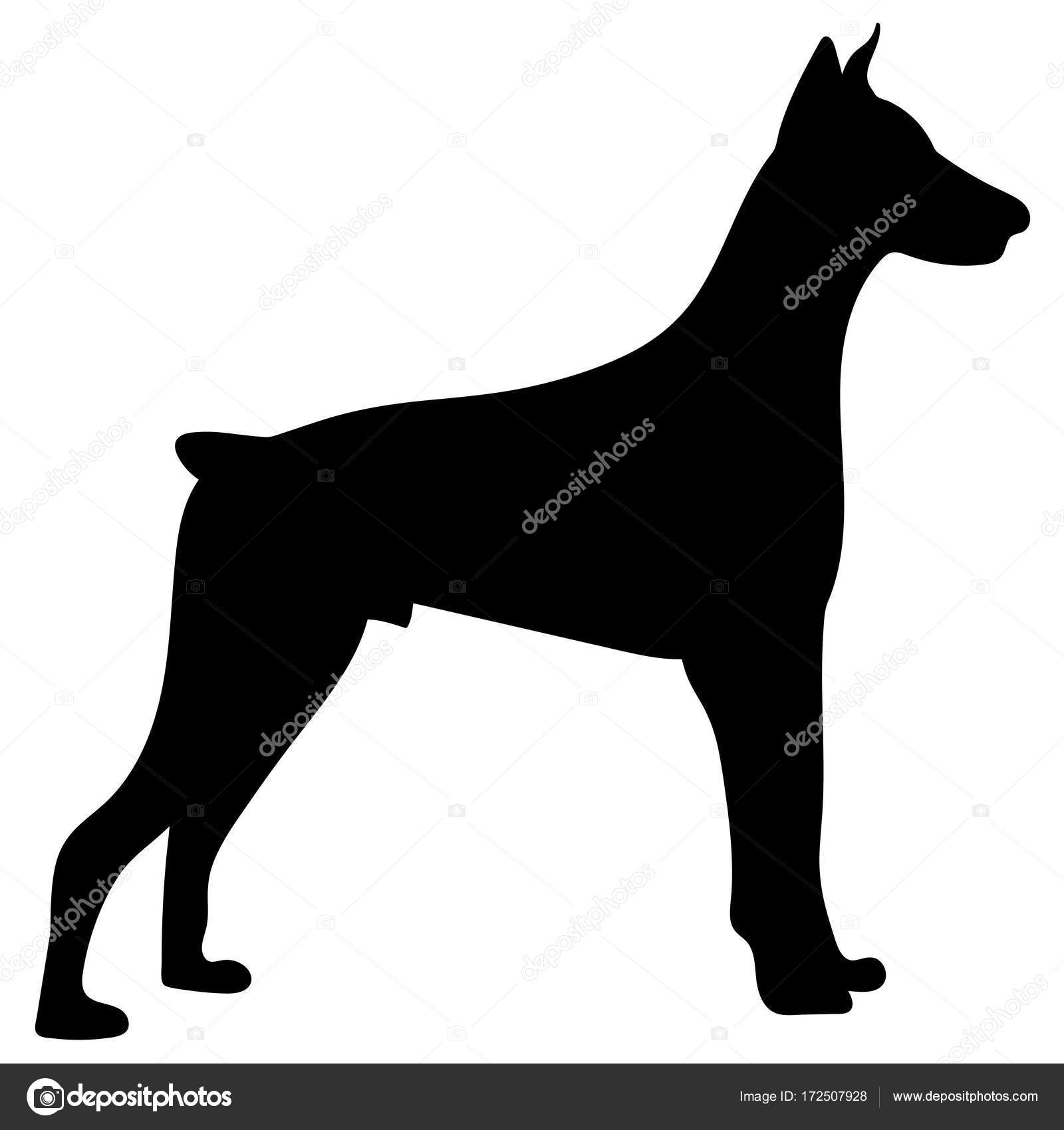 silhouette of a dogvector illustration of doberman pinscher stock vector 172507928