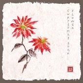 Fényképek Mikulásvirág kézzel rajzolt szabadkézi