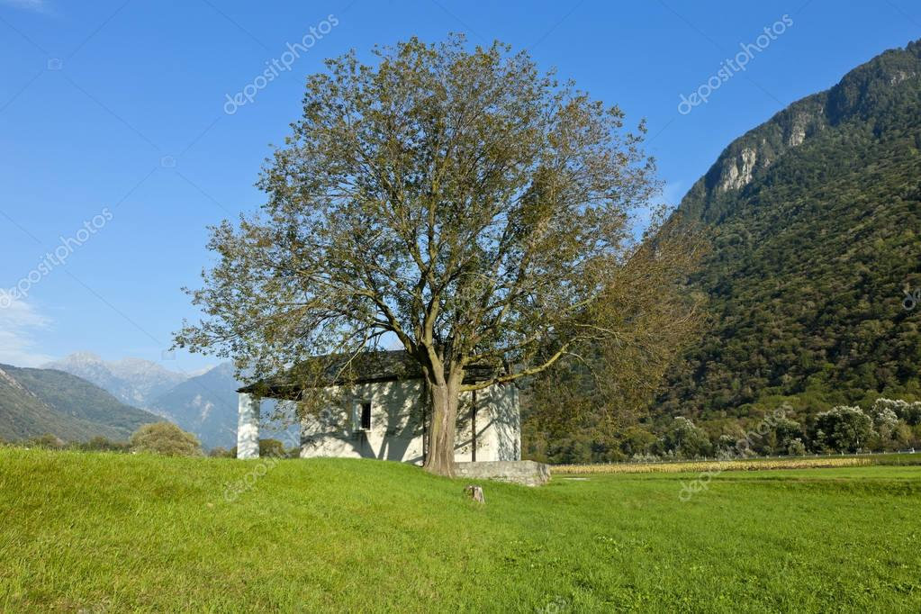 tree and small church