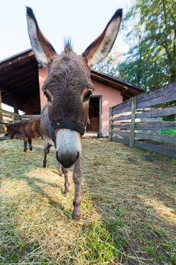 Donkey in the outdoor fence, nobody