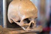 Aglomerace lebek a kostí