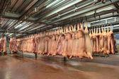 Zmrazené vepřové maso jatečně upravených těl zavěšené na háčky v továrně na maso