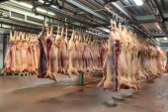 Mnoho mrtvých těl zmrazené vepřové maso visí v chladírenském skladu háček