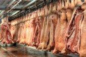 Chladírenský prostor pro maso, vepřové maso jatečně upravených těl v mrazáku.