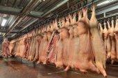 Jatečně upravená těla vepřového masa visící v chladírenském skladu