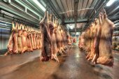vepřové maso jatečně upravených těl zavěšené na háčky v chladírenském nebo mrazírenském skladu