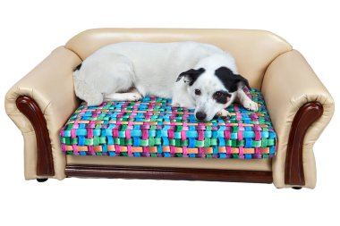 Faux leather sofa for dogs, isolated on white.