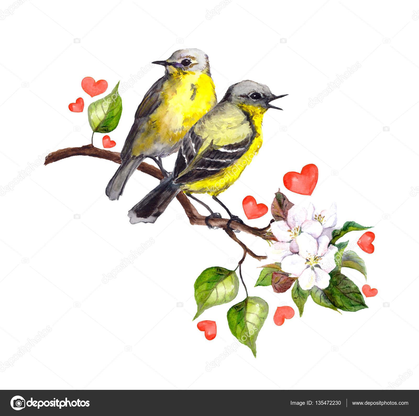 Due uccelli di canzone sul ramo di primavera con foglie e - Primavera uccelli primavera colorazione pagine ...