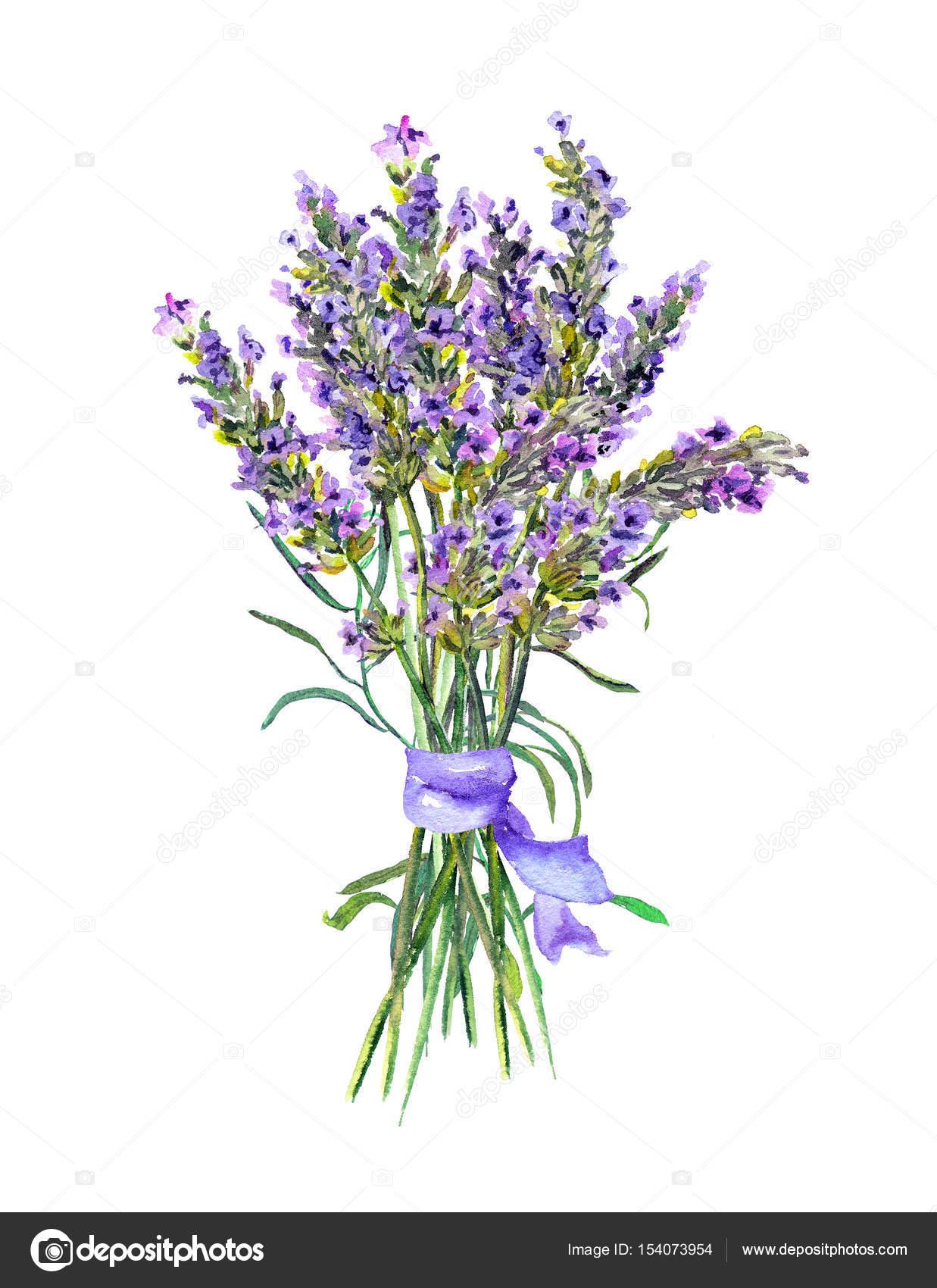 Lavender Flowers Bunch Watercolor Stock Photo Image By C Zzzorikk 154073954