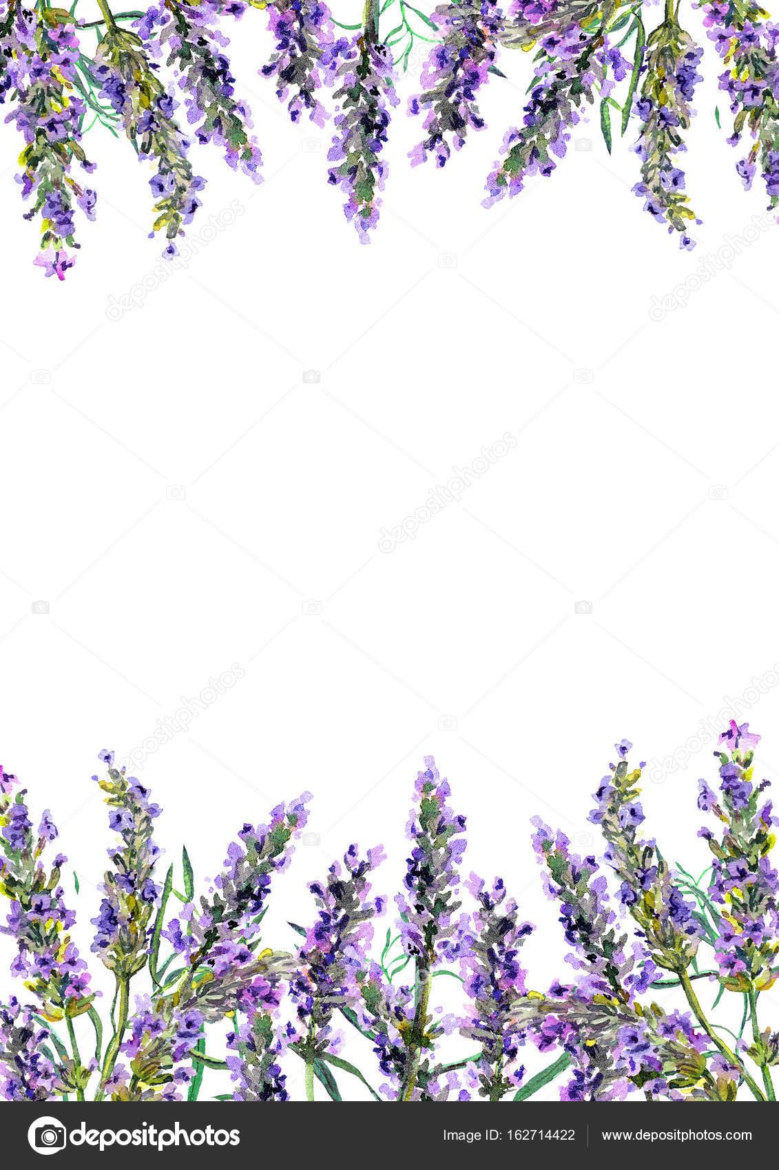 Lavender Flowers Watercolor Border Stock Photo Image By C Zzzorikk 162714422