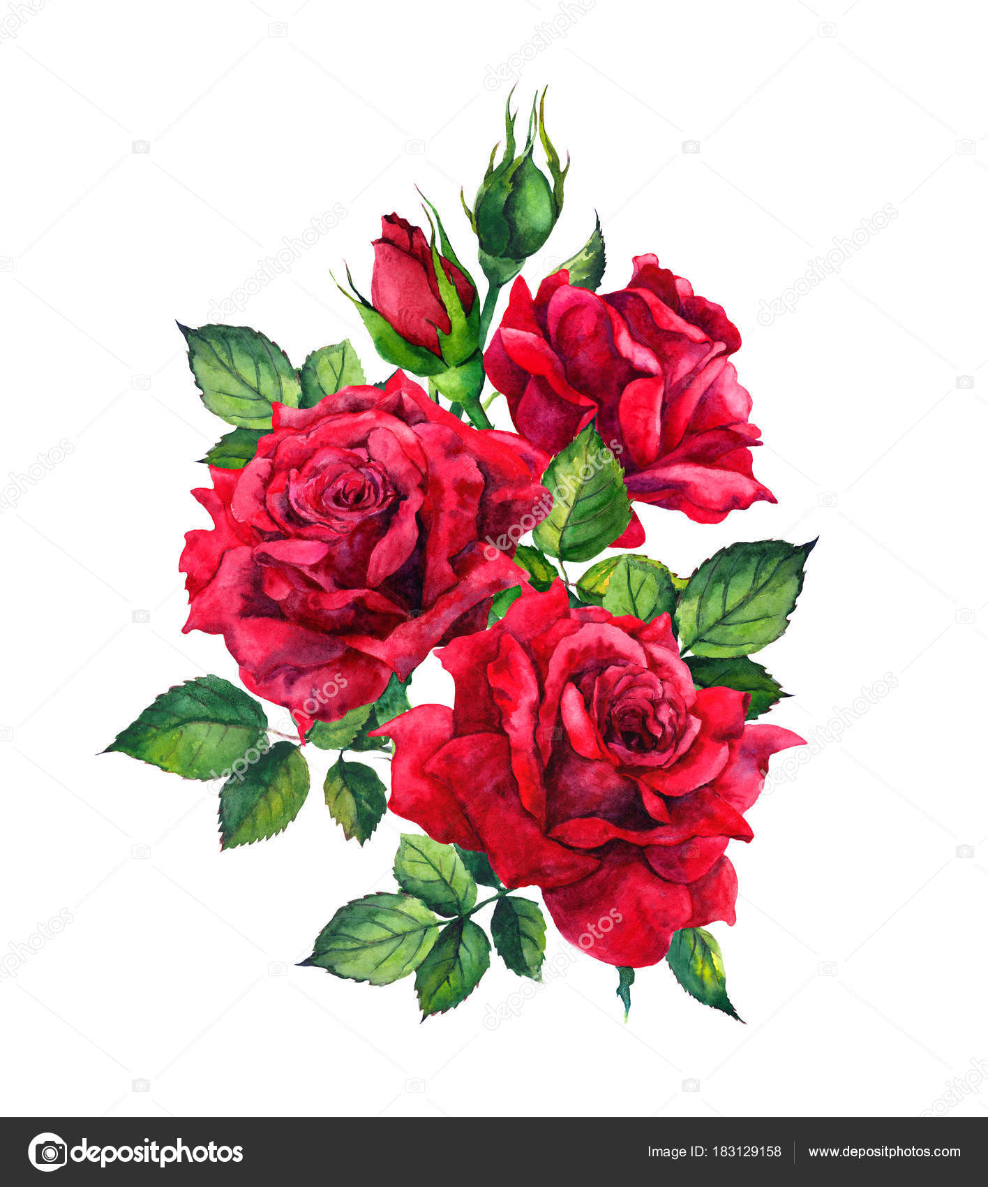 Dibujos Rosas Rojas Dibujo Rosas Rojas Dibujo Acuarela Foto De