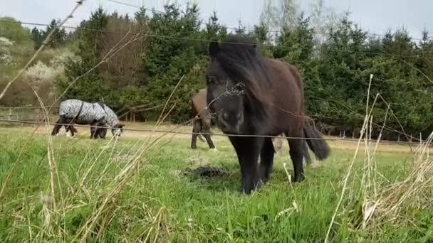 Pony a koně na pastvě