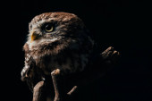 Photo brown cute wild owl on wooden branch isolated on black
