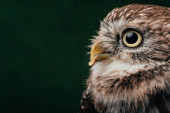 Photo brown cute wild owl isolated on black with copy space