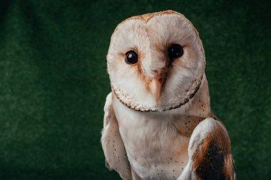 Cute wild barn owl on green background stock vector