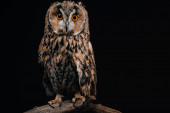 Photo cute wild owl sitting on wooden branch isolated on black