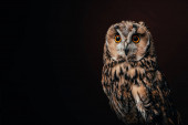 Photo cute wild owl isolated on black