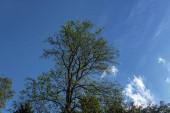 Nízký úhel pohledu na stromy a modré nebe s mraky na pozadí