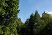 Zelené stromy s modrou oblohou na pozadí