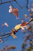 Közelkép a sárga levelek és bogyók ágak kék ég a háttérben