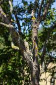 Fotografie Zavřít pohled na mech na kmeni stromu s modrou oblohou na pozadí