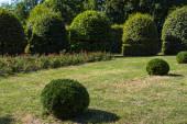 Fű zöld fűvel és nyírt bokrokkal