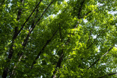 Green foliage on tree branches at summertime