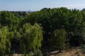 Bäume mit grünem Laub und blauem Himmel im Hintergrund
