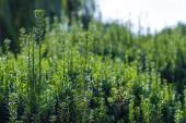 Zavřít pohled na zelené větve keře