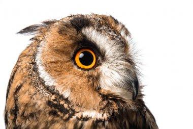 Wild owl muzzle isolated on white stock vector