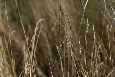 Close up view of wheat stems in field